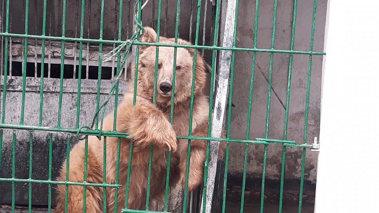 медведи в душанбинском зоопарке